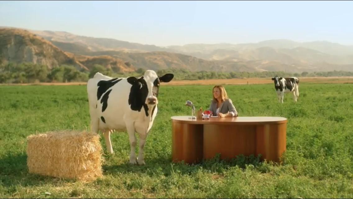 "Chick Fil A ""Cow Appreciation Day-Closing"""