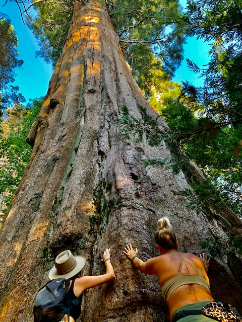 Nearby Nelson Trail is an easy hike to a grove of Giant Sequoias.