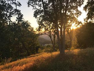Sequoia Meadows 2.jpeg