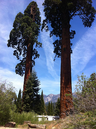 Sequoia Meadows 1.jpeg