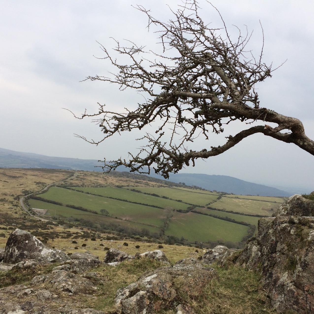 Dartmoor (May Weekend 2016)
