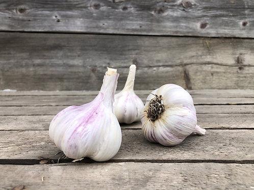 Fresh Garlic - Tibetan Jumbo Bulb