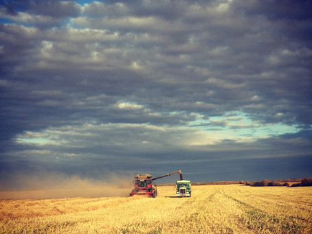 Canadian Agriculture: What it means to me and how it has helped shape who I am.