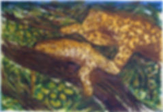 leopardsWB.jpg