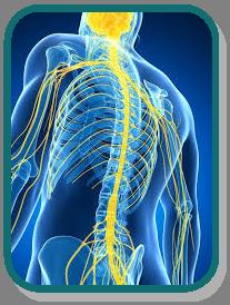 Autonomic Nervous System (ANS) Balancing