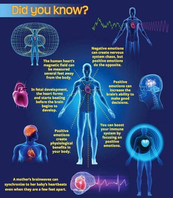Mind Body Graphic.jpg