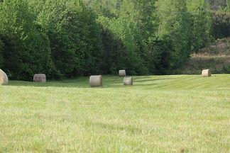 Bails of hay.JPG