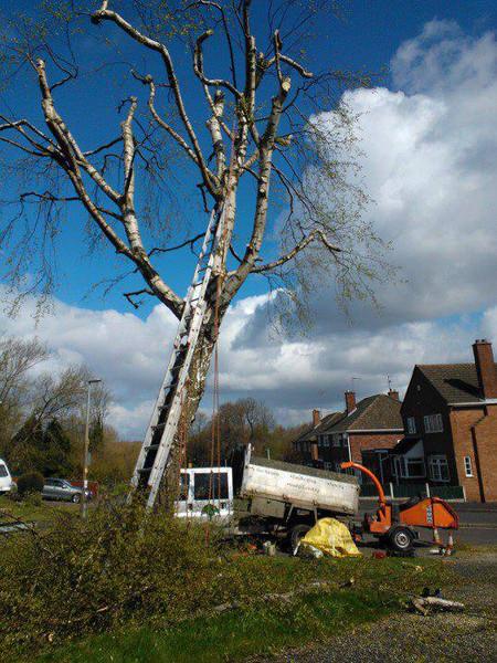 Tree crown reduction halesowen
