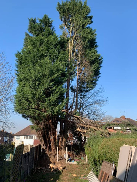Tree Surgeon Halesowen