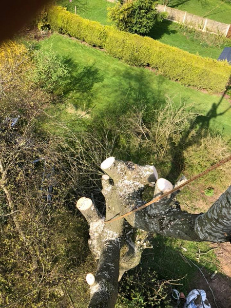 Eastleigh Arborists are one of the best highly skilled tree surgeons in the Kingswinford area. From Crown Reduction, Crown Thinning, Tree Felling, Stump Grinding to Emergency call out Service, we are able to offer a professional service to both residential and commercial customers.