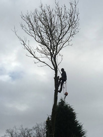 Tree sectional dismantling halesowen
