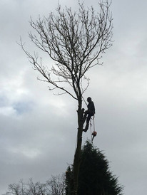 Eastleigh Arborists are one of the best highly skilled tree surgeons in the Stourbridge area. From Crown Reduction, Crown Thinning, Tree Felling, Stump Grinding to Emergency call out Service, we are able to offer a professional service to both residential and commercial customers.