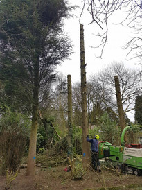 Eastleigh Arborists are one of the best highly skilled tree surgeons in the Hagley, Stourbridge area. From Crown Reduction, Crown Thinning, Tree Felling, Stump Grinding to Emergency call out Service, we are able to offer a professional service to both residential and commercial customers.