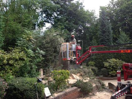 Tree reduction halesowen