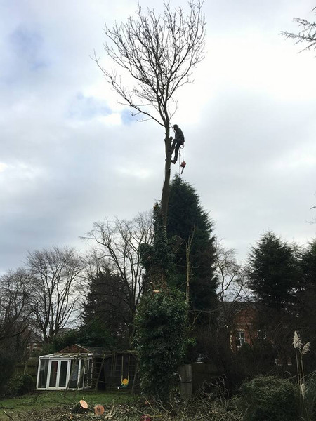 Eastleigh Arborists are one of the best highly skilled tree surgeons in the Clent area. From Crown Reduction, Crown Thinning, Tree Felling, Stump Grinding to Emergency call out Service, we are able to offer a professional service to both residential and commercial customers.  ​