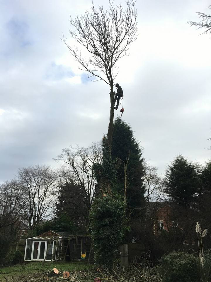 Tree surgeon Romsley