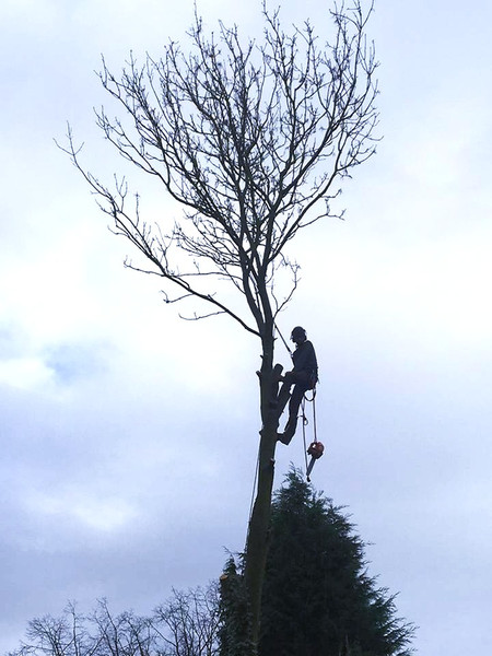 Eastleigh Arborists are one of the best highly skilled tree surgeons in the Quinton area. From Crown Reduction, Crown Thinning, Tree Felling, Stump Grinding to Emergency call out Service, we are able to offer a professional service to both residential and commercial customers.