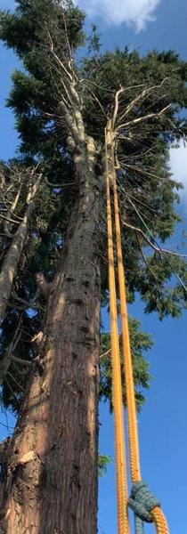 Tree Surgery Halesowen