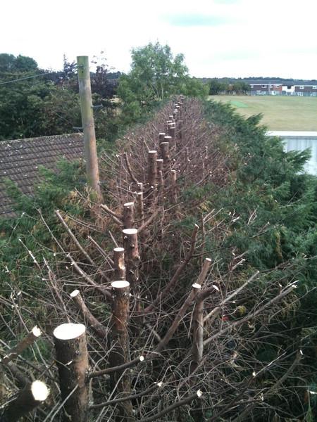 Hedge trimming halesowen