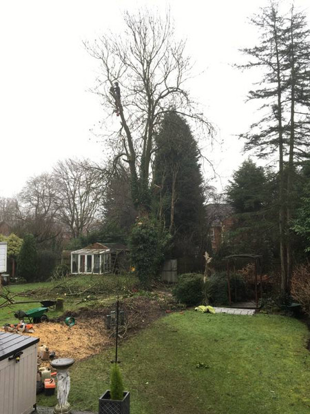 Eastleigh Arborists are one of the best highly skilled tree surgeons in the Bromsgrove area. From Crown Reduction, Crown Thinning, Tree Felling, Stump Grinding to Emergency call out Service, we are able to offer a professional service to both residential and commercial customers.