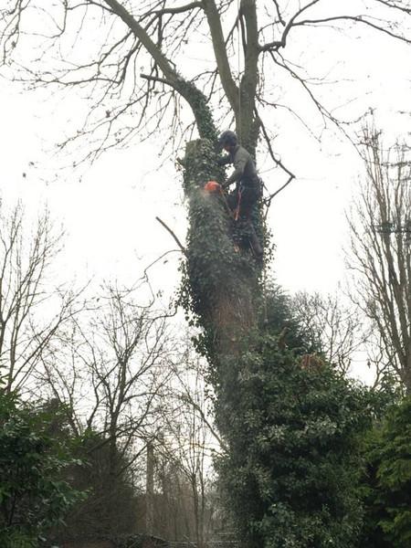 Tree felling halesowen