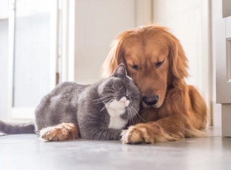 Did you know cats and dogs experience fear and anxiety just like humans?