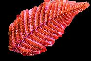 aborigens folha
