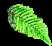 folha verde.png