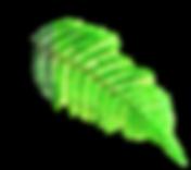 aborigens leaf