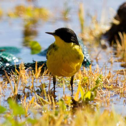 birds-27.jpg