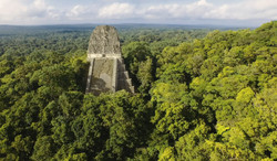Naachtun, la cité maya oubliée