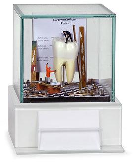 Dental Art Glass Case 2