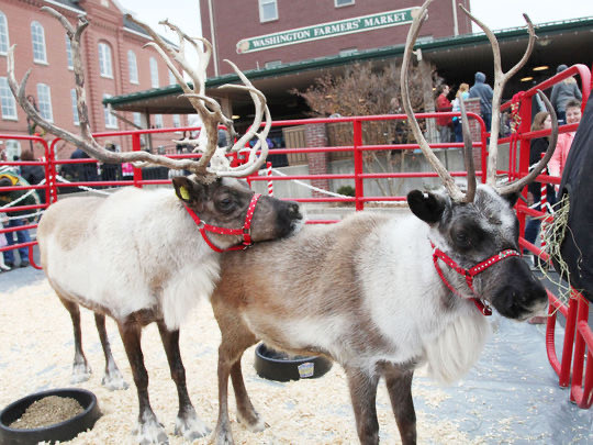 Show-Me Reindeer Missouri