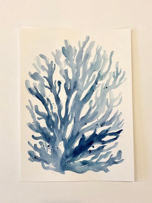 Blue Coral no. 1