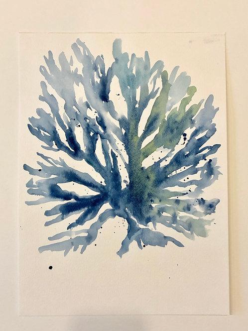 Blue Coral no. 2