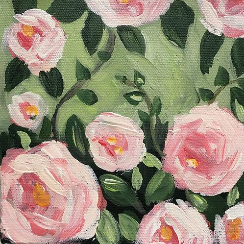 Mini sweet blush rose