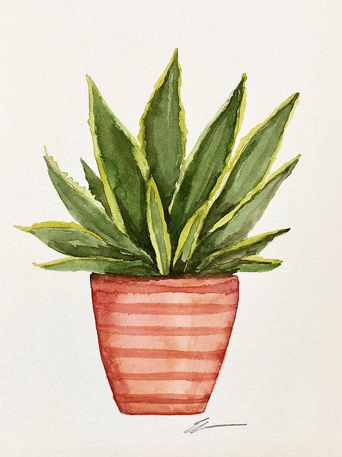 Aloe Original watercolor painting