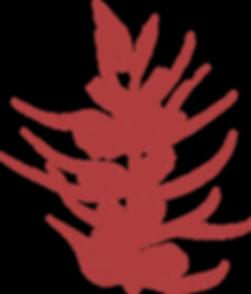 juniper_2(transparent).png
