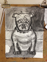 Animal Study of a Dog
