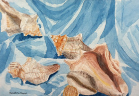 Still Life of Shells and Fabric
