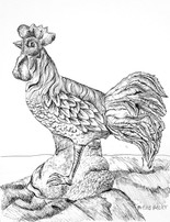 Animal Study of a Rooster
