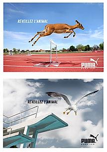 1-Puma.jpg