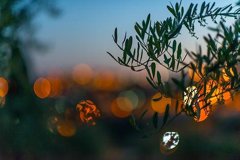 Garden-in-jerusalem-694407.jpg