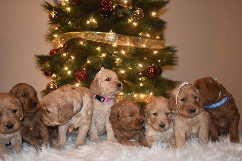 puppy group 3 week 4.JPG