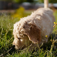 190528 Sadie and Clyde Puppies-90.jpg