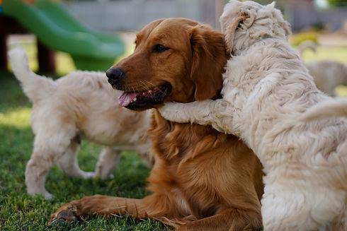 190528 Sadie and Clyde Puppies-81.jpg