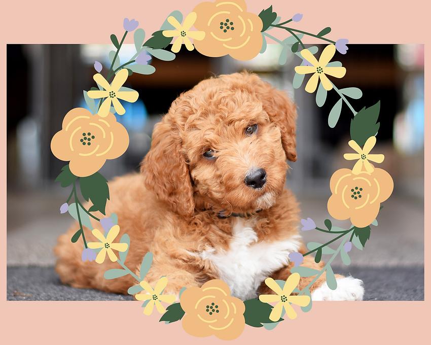 Floral doodl.png