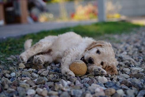 190528 Sadie and Clyde Puppies-129.jpg