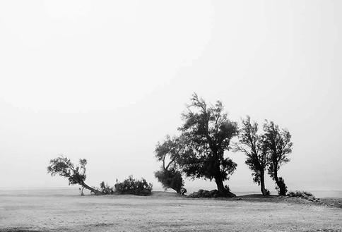 Few Trees in The desert.