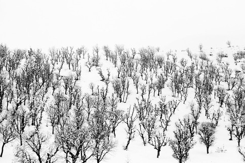 Forest in the Snow. Baneh, Iran 2019